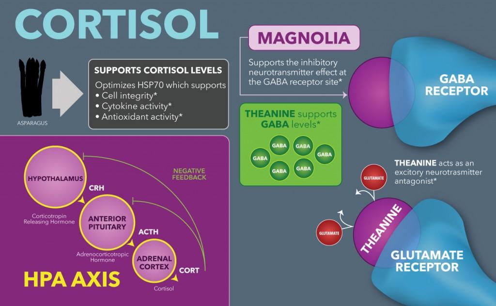 Cortisol from the DaVinci Protocol Guide