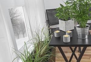 House-plants-winter