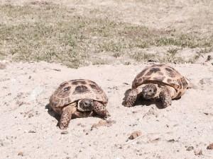 turtles water