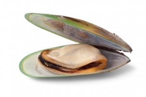 green-lipped-mussel-2