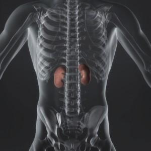 adrenal-gland-stress