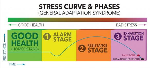 stress phases metabolism
