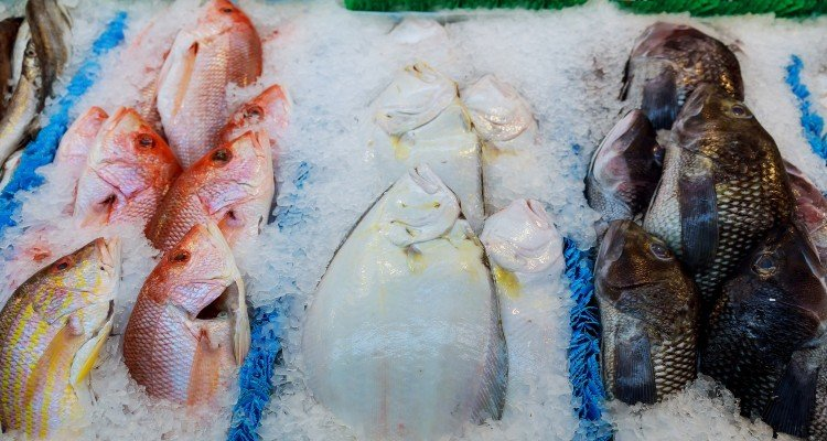 fish-on-the-counter-at-the-store-frozen-fish-on-the-counter-at-the-supermarket_t20_nRYGe4 (1)