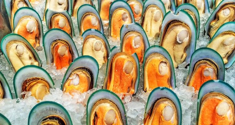 mussel-in-ice-for-fresh_t20_EOgWlX (1)
