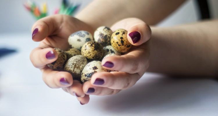 quail-egg-benefits-immune-system
